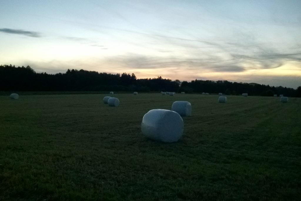Siloballen für die Kühe