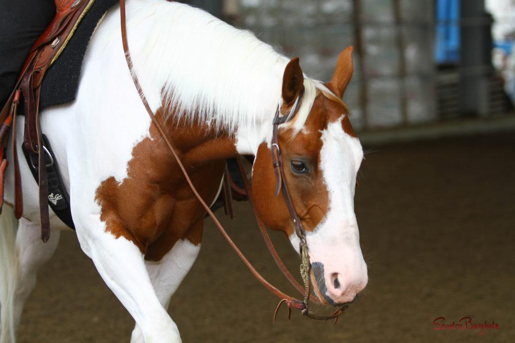 Ekkharthof Gutsbetrieb Pferd Apu