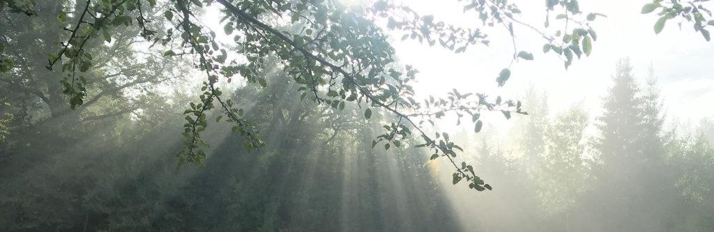 Gutsbetrieb Landwirtschaft Sonnenstrahlen